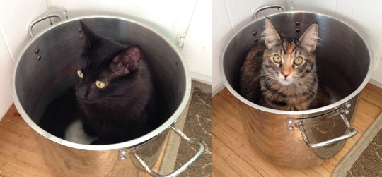 Fritz and Tigress in the dye pot