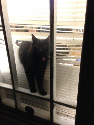 """Fritz saying """"Hello!"""""""