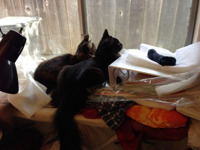 Fritz and Tigress, squirrel-watching