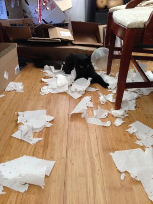 May 11 - Who shredded the paper towels??