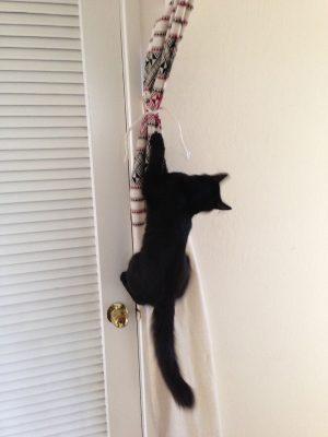 December 13 - Fritz the incredible flying kitten