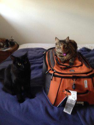 Fritz and Tigress staring reproachfully at me