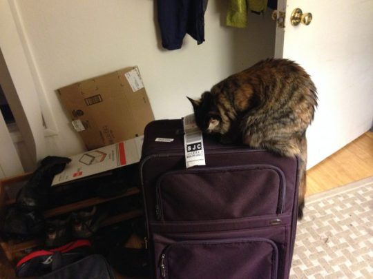 Tigress investigating my mom's luggage