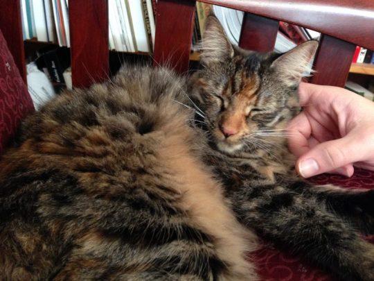 Tigress getting scritched