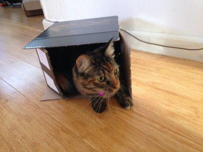 Tigress in a cocoa box
