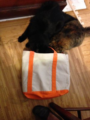 Two cats and a bag