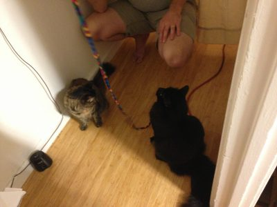 Fritz and Tigress playing with string
