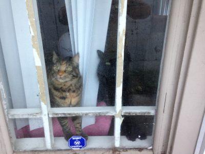 Fritz and Tigress at the door