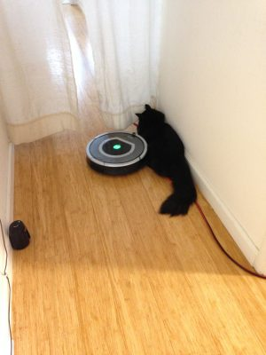 Fritz being attacked by a Roomba