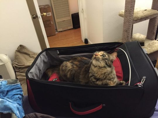 Tigress guarding Mike's luggage