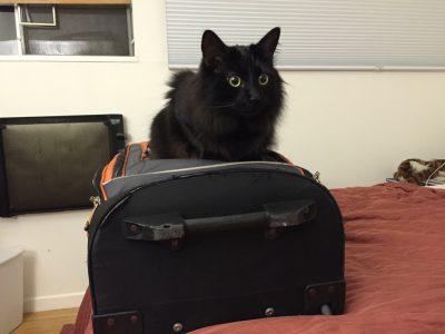 Fritz claiming my luggage