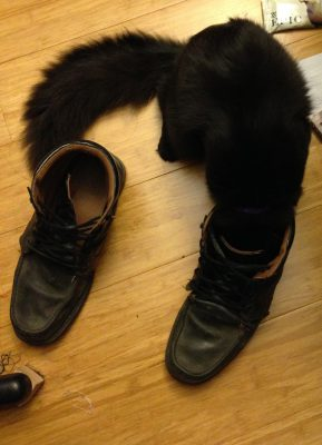 Fritz sniffing shoes