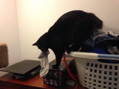 Fritz stealing a sock
