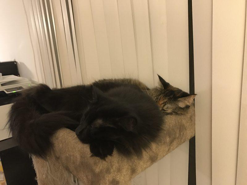 Fritz and Tigress, world synchronized sleeping champions