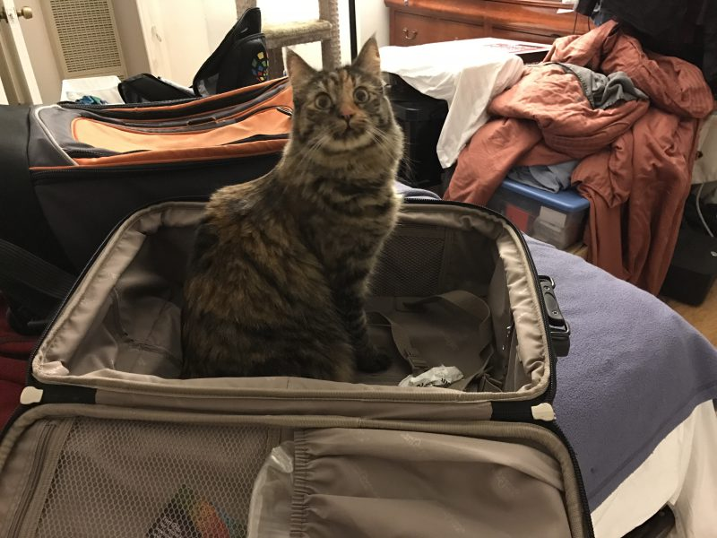 Tigress helping me pack