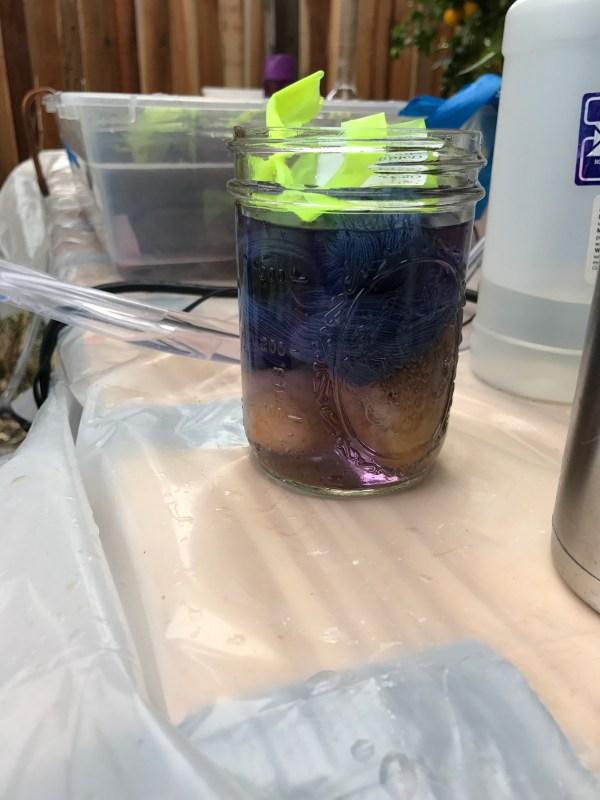 individual dyebath - single jar