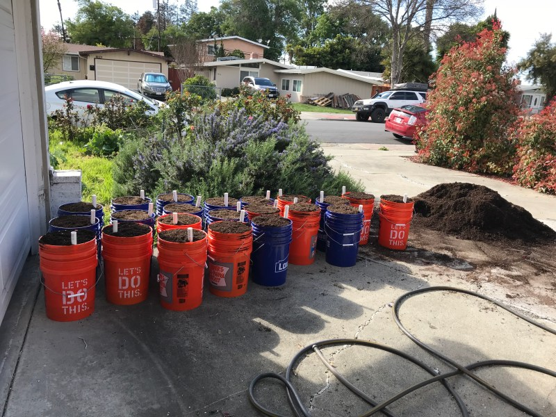5 gallon self-watering pots (made from 5-gallon buckets)