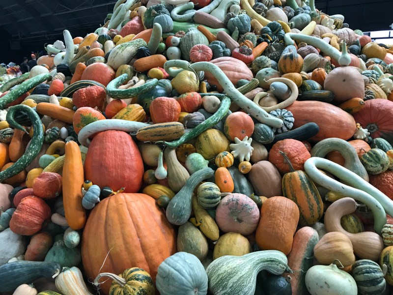 Giant mound of squash, viewed slightly closer