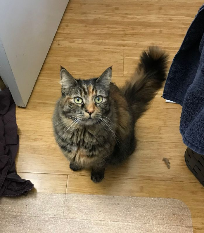 My cat Tigress, demanding I do my One Job.