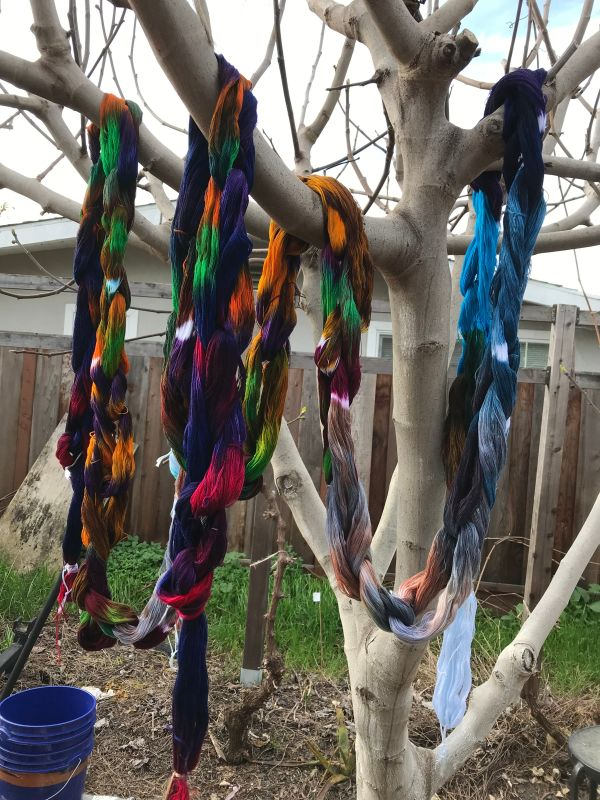 painted warp hung to dry in the fig tree