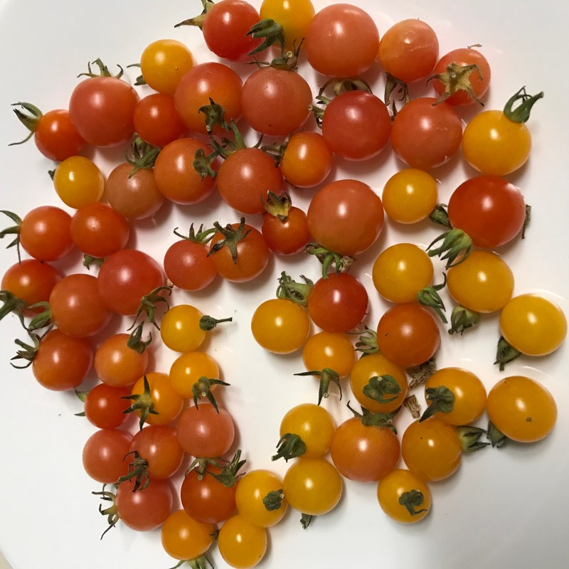 Fruity Mix tomatoes