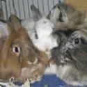 Märchen der Kaninchenhaltung
