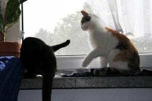 TierZeit 08 Katzen-Kommunikation