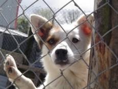 Alex S - Aufgaben des Tierschutzes Hund