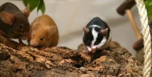 Tina B. - Von jungen und alten Mäusen (1)