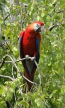 Carina T - Rekorde im Vogelreich