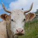 Wissenswertes über Nutztiere