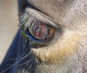 Tina B.- Pferd