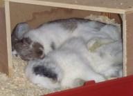 Anna B - Märchen der Kaninchenhaltung (1)