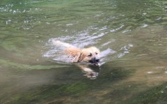 Jacqueline G - Hundeschwimmen (1)