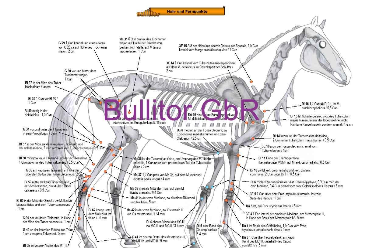 Akupunkturpunkte Beim Pferd