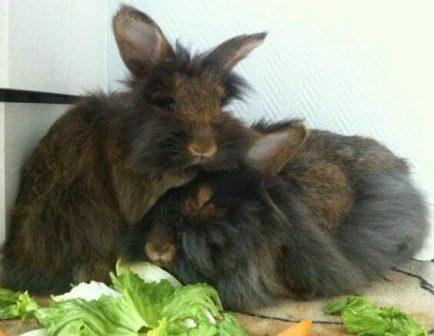 Kaninchen Tierarztbergedorf
