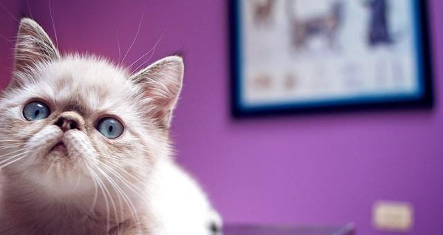 Impfplan Katzen