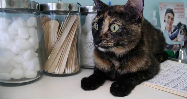 Wie oft sollte Ihr Haustier zum Tierarzt?