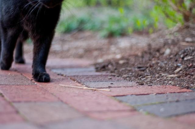 Erhöhtes Meningitisrisiko für freilaufende Katzen