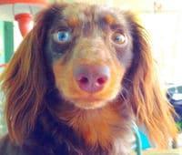 Hund beim Blick in die Überwachungskamera