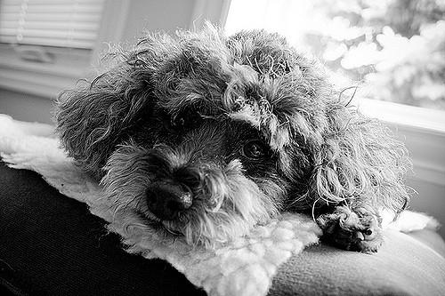 Cushing Syndrom beim Hund