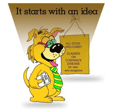 Symptome, Therapie und Prognose Cushing Syndrom Hund