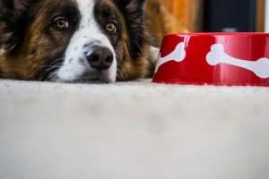 Ein glücklicher Hund nach dem Fressen