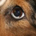 Knoten, Wucherungen & Zysten am Hund können jederzeit auftreten