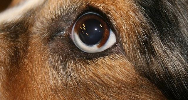 Knoten, Wucherungen & Zysten am Hund