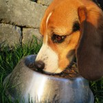 Sind natürliches und Bio Hundefutter besser?