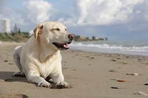 Herzwurm Hund - nicht nur am Mittelmeer besteht das Risiko