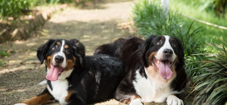 Niereninsuffizienz bei Hunden