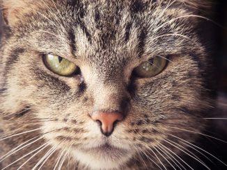 Katze Protestpinkeln sauer