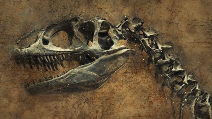 dinosaurier-skelett